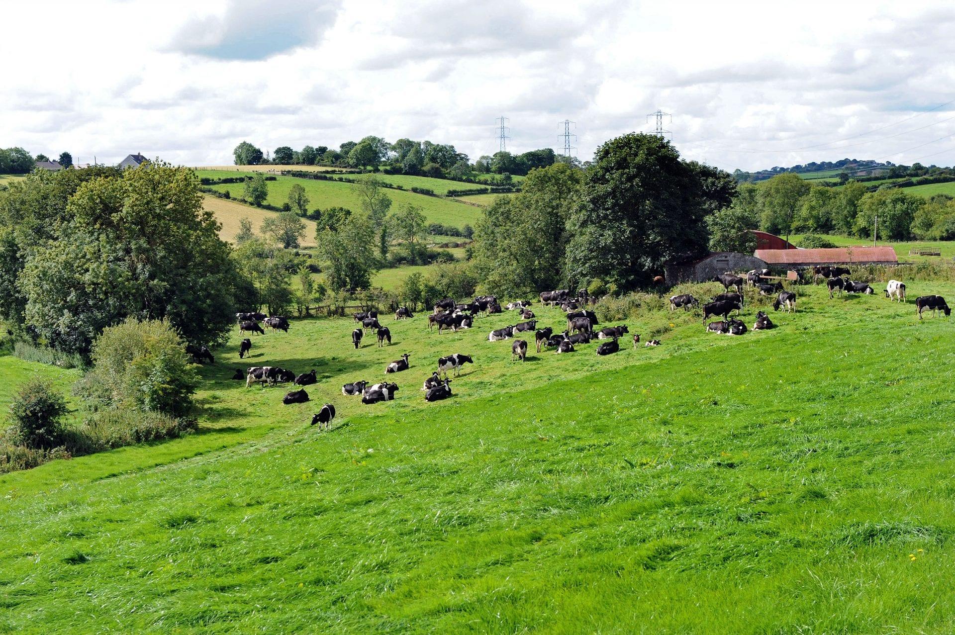 EU Sustainable Dairy